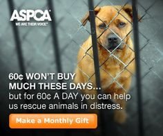 Support the ASPCA